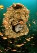 diving-medicine-course-52-med.jpg
