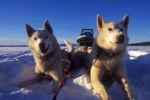 Charity Dogsledding Challenges 2009 | Your polar transport team