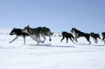 Charity Dogsledding Challenges 2009