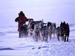 Charity Dogsledding Challenges 2009 | Drive your own dog team